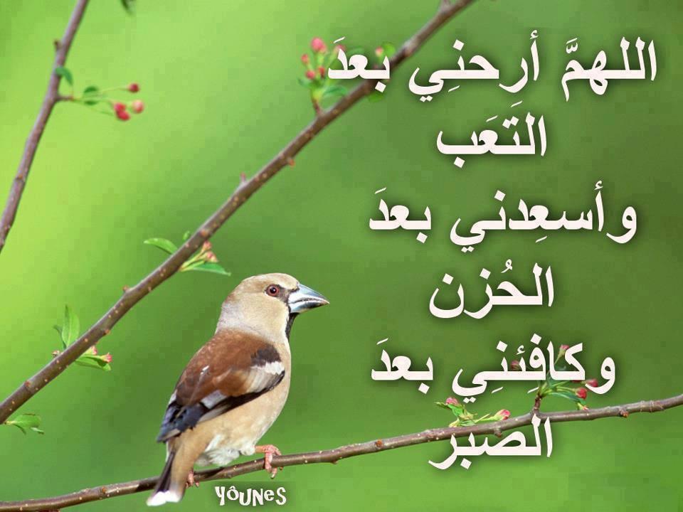 بالصور ادعية لقضاء الدين 1590fa9ea6b6cad3ba817a9e9b5330f5
