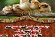 صور ادعية طيور الجنة