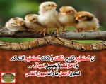 ادعية طيور الجنة