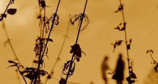 صورة دعاء مطر